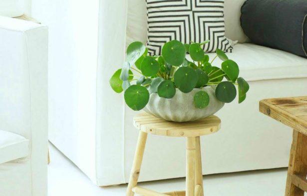 ανθεκτικά φυτά εσωτερικού χώρου
